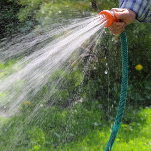 Best Time Of Day To Water The Lawn