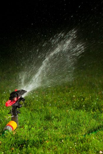 Best Time Of Day To Water The Lawn | lawn care | tips and tricks | gardening | gardening tips | lawn tips | lawn care tips