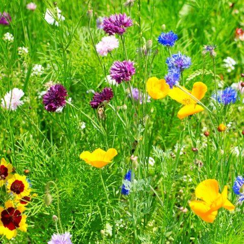 Plant Wildflowers