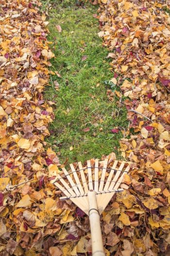 Fall Lawn Maintenance | aerate | power rake | fall | lawn | maintenance | lawn maintenance