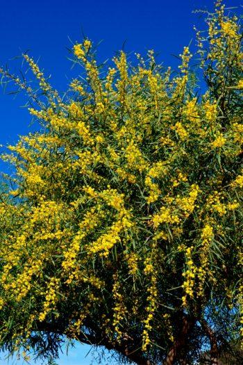 Fragrant Flowering Plants | flowering shrubs | flowering trees | fragrant plants | plants | flowers | fragrance