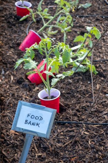 Give Back With Your Garden | fruits | garden | gardening | tips and tricks | vegetables | service | charity | food bank