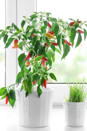 Vegetables To Grow In Winter | indoor crops | vegetables | winter | winter gardening | gardening | indoor garden