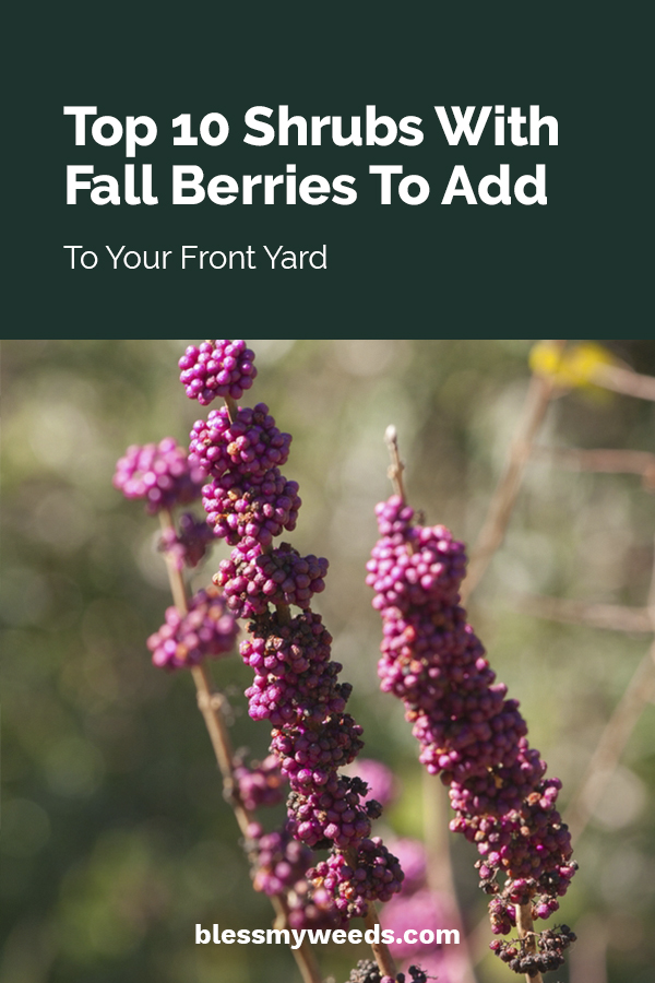 I love to see the fall colors every year. If you love it too and want to add some shrubs to your yard that pop every year with fall berries, I've got the top ten to choose from. Year after year these shrubs come to life with red, orange, purple or white berries. Plant some today and make you yard look so beautiful.