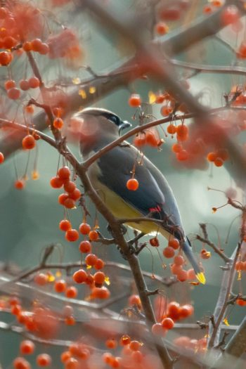 Want to attract birds to your yard this fall? Easy! Add some of these shrubs with fall berries to keep life in your garden.