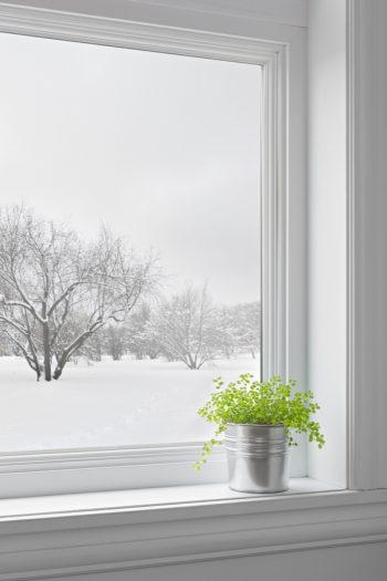 Easy to Grow Houseplants | houseplants | winter houseplants | winter | plants to grow in winter | winter plants