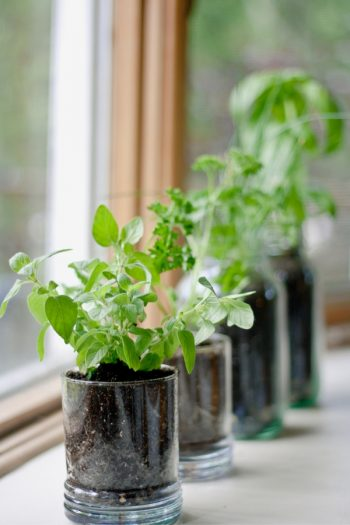 Just because Spring can be yucky doesn't mean there aren't garden things to do. Try growing herbs in your kitchen. For more Spring garden projects, look here!