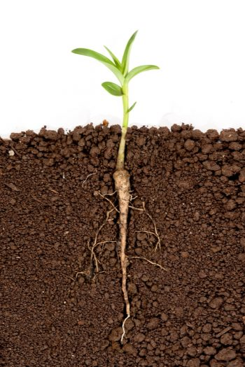 In order to have a successful garden, you must first know the soil layers. You can grow healthy plants if your soil isn't healthy.