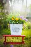 Cottage Flower Garden Porches