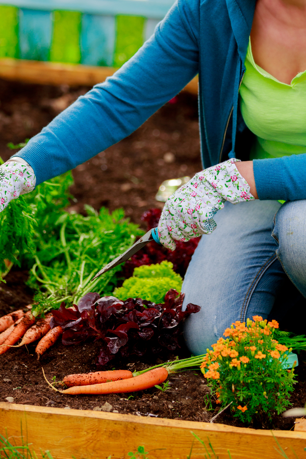 Organic gardening gets more popular with every season as home gardeners grow more aware of the chemicals they put on their food. Don't miss out on these tips on organic gardening for beginners! Your vegetables will thank you!