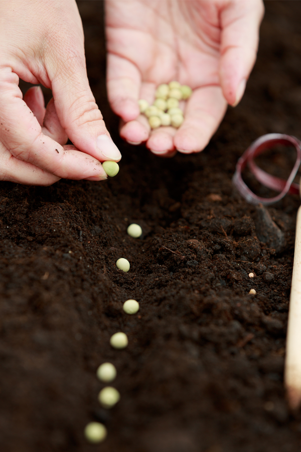 Organic gardening gets more popular with every season as home gardeners grow more aware of the chemicals they put on their food. Don't miss out on these tips on organic gardening for beginners! Take a look!