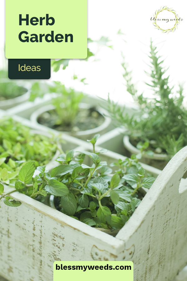 The perfect information for herb garden newbies! Learn about herbs and their benefits, which herbs regrow, and how to store and preserve your homegrown herbs. #blessmyweedsblog #herbgardeningideas