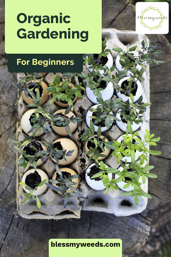 There's never been a better time to begin organic gardening. If you're a beginner, you need all the helpful information you can get, and you'll find it right here! #blessmyweedsblog #organicgardening #organicgardeningforbeginners