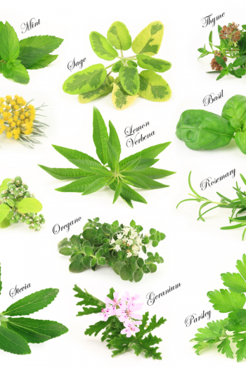 There's never a bad time to plant an herb garden, because there are so many ways to do it. I've got herb gardening ideas to help you feel more confident.