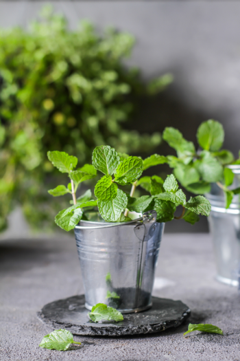 There's never a bad time to plant an herb garden, because there are so many ways to do it. I've got herb gardening ideas to help you feel more confident. Check them out!