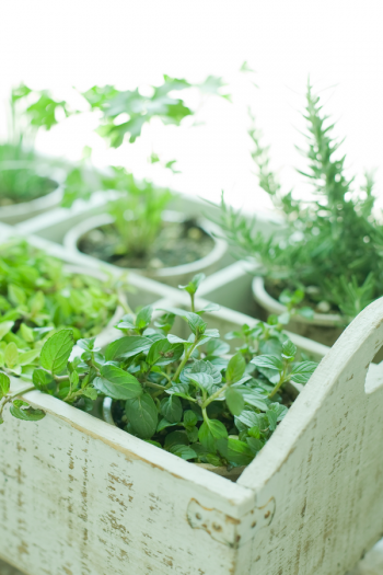 There's never a bad time to plant an herb garden, because there are so many ways to do it. I've got herb gardening ideas to help you feel more confident. Get ready to start growing your own herbs.