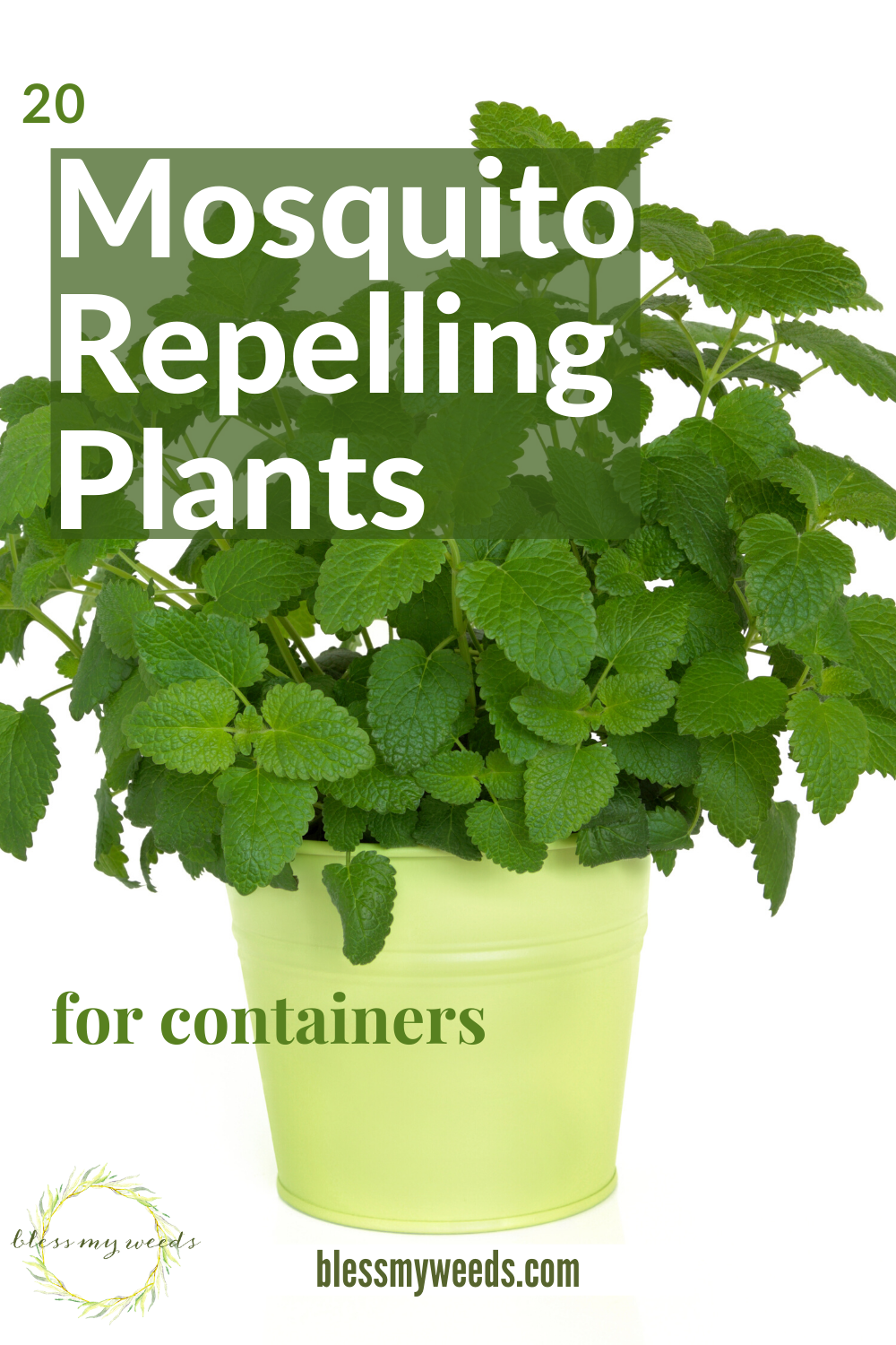 Mosquito Repelling Plants Container Safe For Dogs Patios Landscaping Outdoor Living Blessmyweeds Com