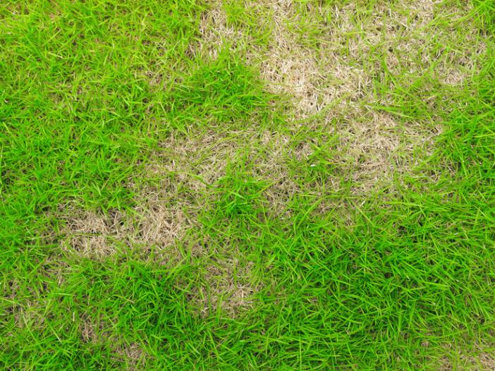 Bare spot in the lawn