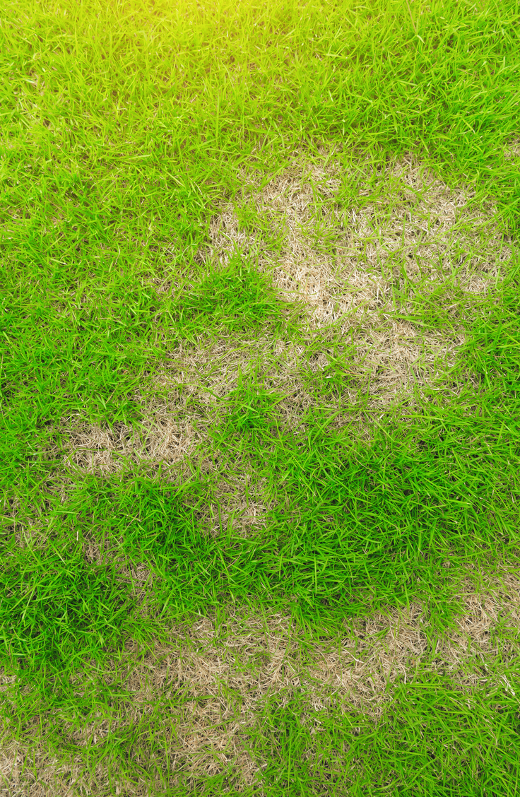 Are you sick of bare spots in your lawn? Learn how to repair bare spots in the lawn. It's easier than you think to get rid of bare spots in the lawn for good!
