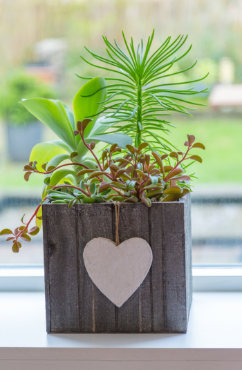 How about hanging DIY window planter boxes for indoors? This wooden box makes a perfect planter box and will look so cute in a house.