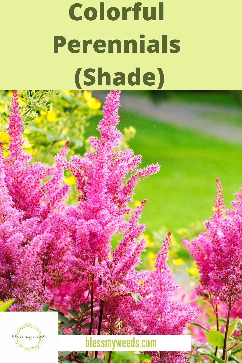 Want a yard that makes people stop the car just to drool? Well, these colorful perennials are exactly what you need. Pack with powerful color, they return every year bigger and better. Keep reading because you know that is exactly what you want. #perennials #flower #flowergardening #gardeningtips #blessmyweedsblog