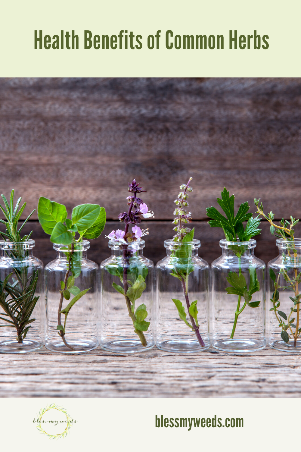 While most use herbs in cooking and spices, it doesn't hurt to know of the health benefits as well. The Chinese have used herbal medicine for centuries and are convinced of their healing properties. Read on to learn more about what these common herbs can do. #3commonherbs #healthbenefitsofherbs