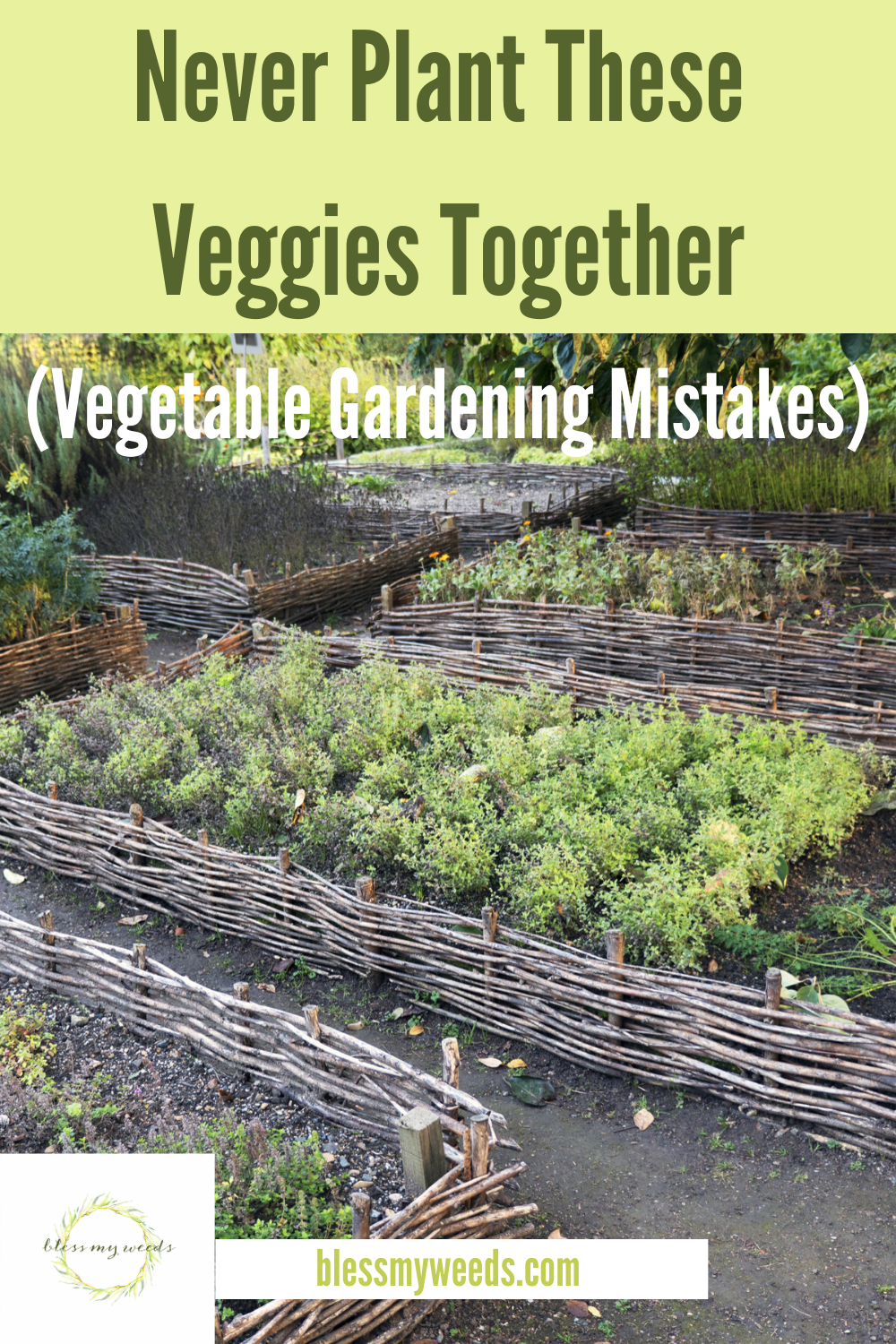 Veggies are veggies, right? Well, when it comes to where you plant them, some veggies are not the same. Discover which veggies do better when planted away from certain other veggies. And make the most of your gardening experience! #ideasforgrowingvegetables #ideasforgrowingveggies