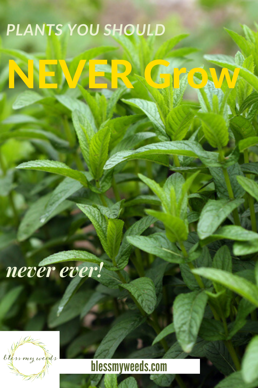 Just because something looks beautiful, doesn't mean it is going to be good in your yard. Plants, we are talking plants. Sometimes knowing what not to do is more helpful than knowing what to do. Read on to learn more about plants you should never grow.#plantsyoushouldnevergrow #avoidgrowingtheseplants #planttips #gardeningtips #beesandrosesblog