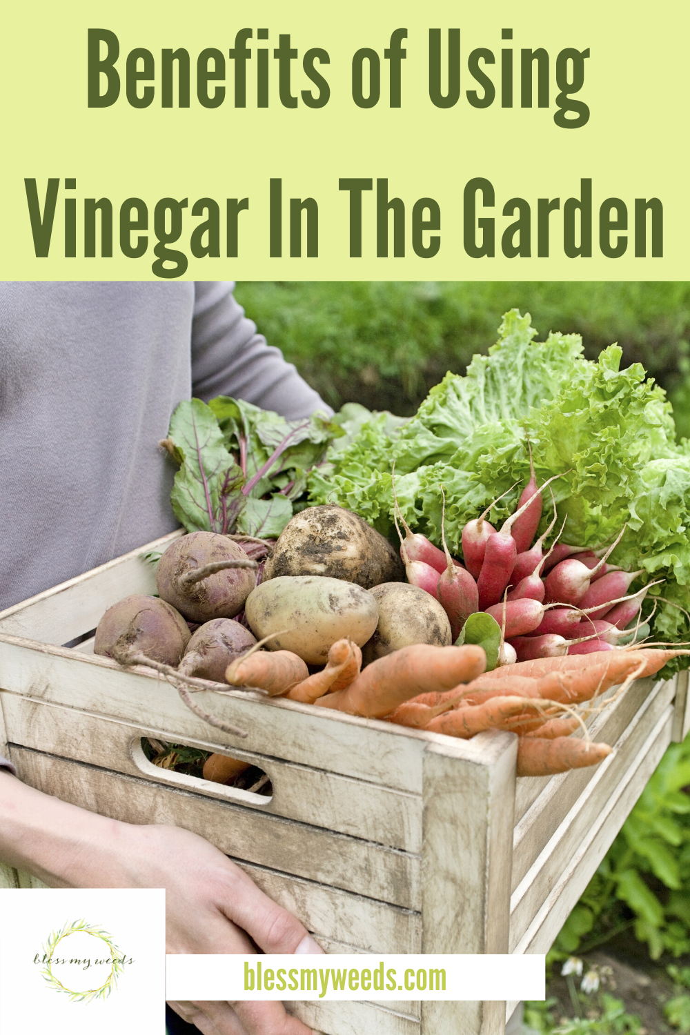 Professional gardeners know the benefits of using vinegar in the garden. Not only do they know this, they actually use it. While you thought vinegar was just for inside the house, this article will teach you why you should consider it for the garden as well. Keep reading to learn about all the things that vinegar can do to save your garden. #homemadepesticides #DIYweedkiller #vinegar