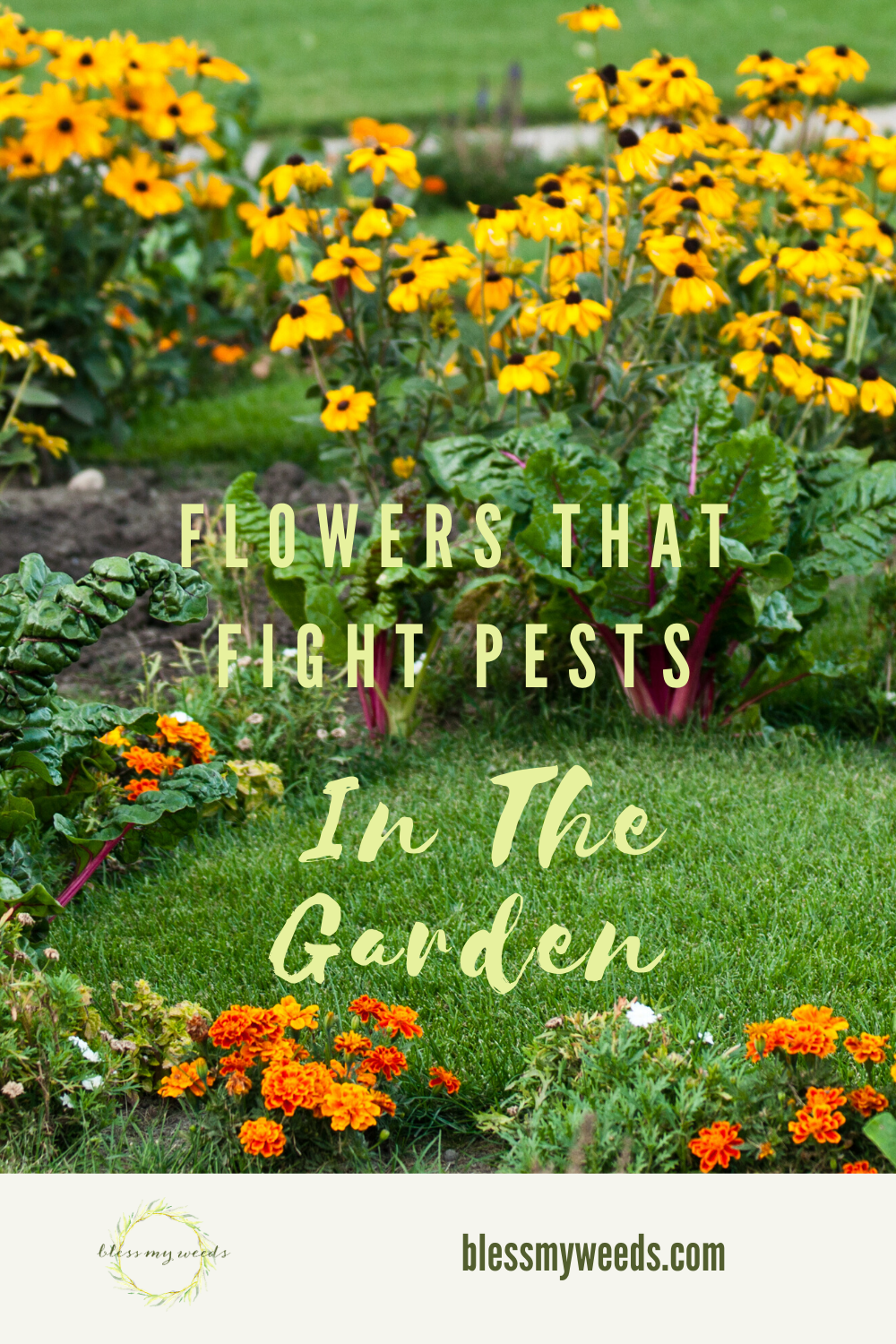 There's nothing more annoying to a gardener than pests. Ugh. If you are like me you like to not use chemicals. I am more into natural gardening. If you are interested in natural pest control ideas, read this post for some easy remedies to those creepy crawly things. #naturalremediesforpests #gardenpestcontrolideas #gardeningtips