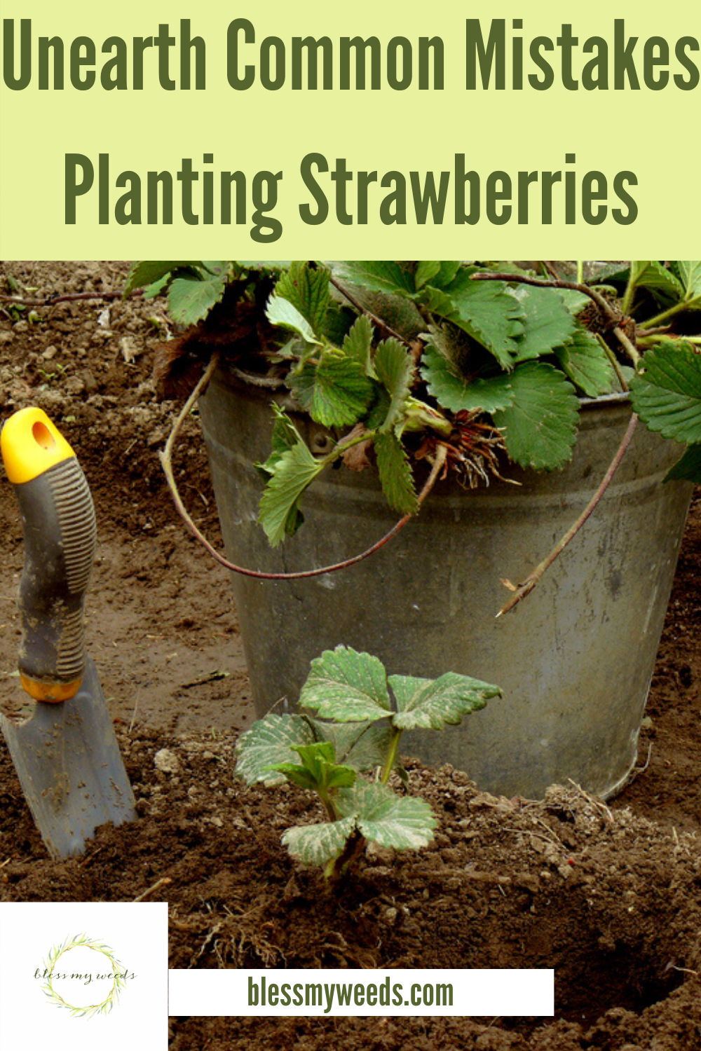 Ever wanted to grow your own strawberries? Let us help you. Bless My Weeds has created this post to offer tips about growing strawberries in all types of pots, vertically, and more. Think of a summer with fresh strawberries. Sounds great, right? Read on and then get growing without making common mistakes. #fruit #gardeningforbeginners #howtogrowstrawberies #verticalgardening