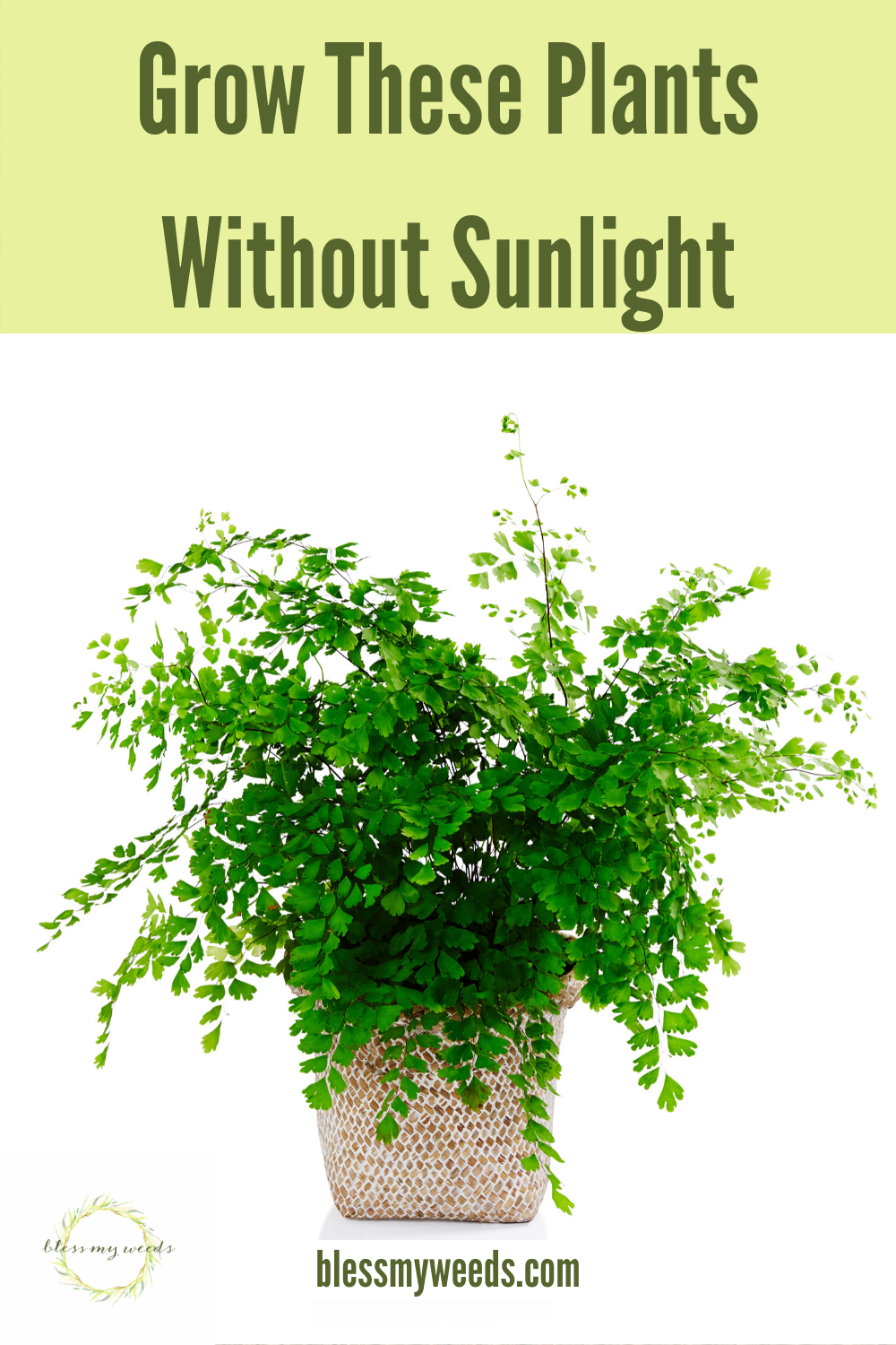 If you are like most people, you stick your houseplants near a window to capture the sunlight. But, many plants need filtered light so that idea doesn't work for all plants. In fact, there are some plants that need very little to no sunlight. What? I am sure you are puzzled! No worries. Keep reading this post for a list of 15 plants that can do this. Now the opportunities for plants are endless. Imagine all the places you could put them. #plants #indoorplants #houseplantsforlowlight #plantsthatneedlowsunlight