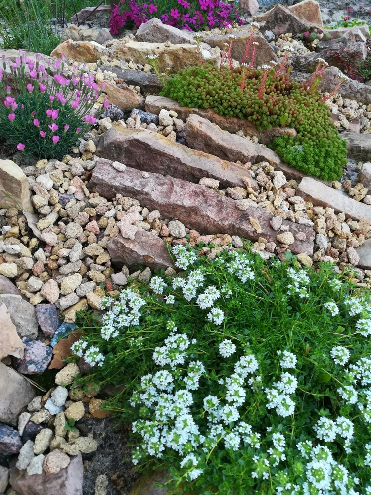 A rock wall is tricky, but if you know the perfect rock wall landscaping plants, you can dress it up right! Creeping Thyme grows easily among rocks.