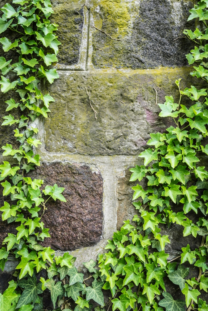 A rock wall is tricky, but if you know the perfect rock wall landscaping plants, you can dress it up right! Ivy will always be a timeless choice.