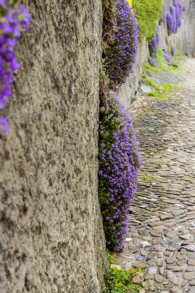 A rock wall is tricky, but if you know the perfect rock wall landscaping plants, you can dress it up right! Moxx Phlox is always a great choice!
