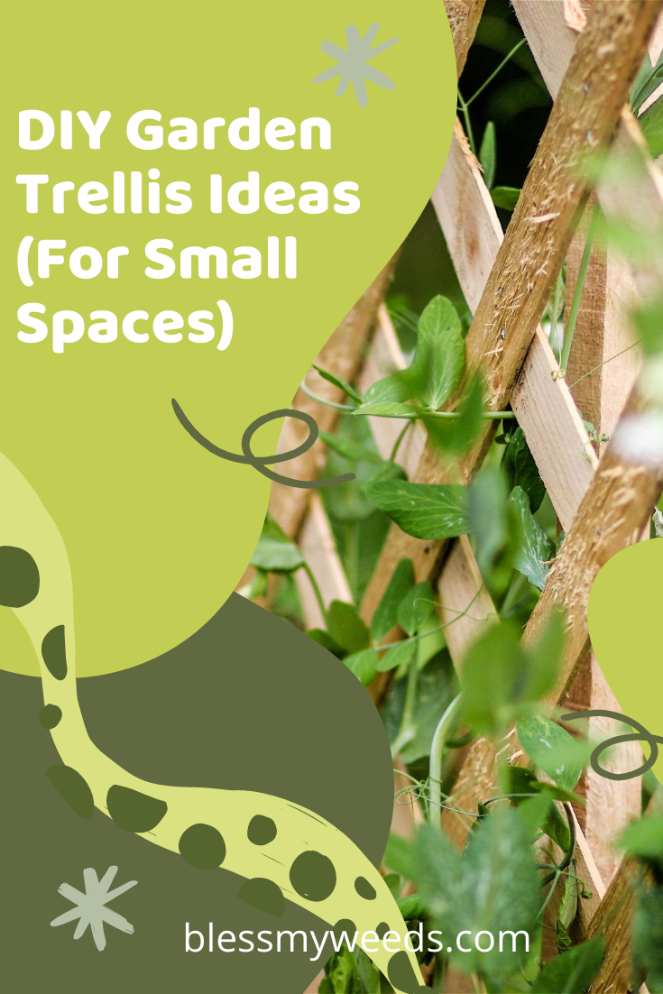 Small gardens are often my favorite. A quaint space of peace. If your garden is small, why not try adding a DIY Garden Trellis. Adding height by allowing vines and plants to grow makes a yard more spacious. Read the post for more ideas. #gardens #trellisideas #smallgardenideas #blessmyweedsblog
