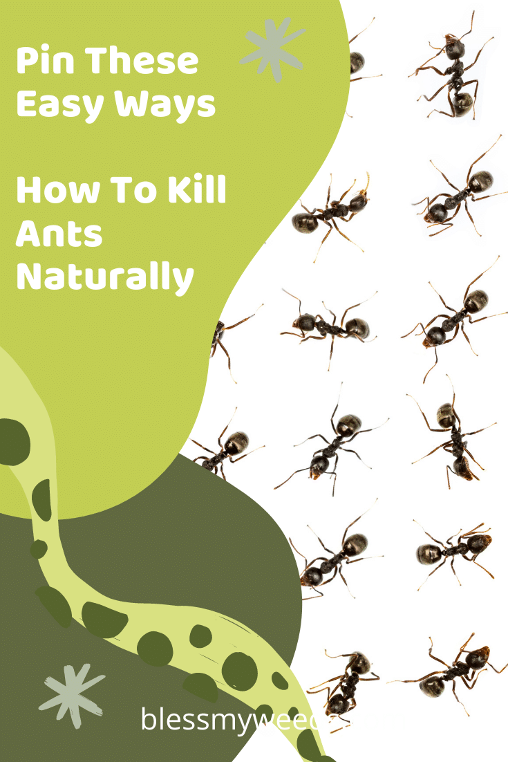 To me, there is nothing that can ruin a summer faster than annoying ants. Those little buggers are a nightmare. They seem to be everywhere. I swear they think they are plotting to take over my home. But, those little #O$(&@&# are not going to win this battle. Why? Well, I have the easiest and safest way to kill them. Better than biological warfare is a simple natural ingredient found in your pantry. If you are fighting a full scale invasion, keep reading to learn how you can win the war. #killantsnaturally #naturalingredienttokillants #pestcontrol