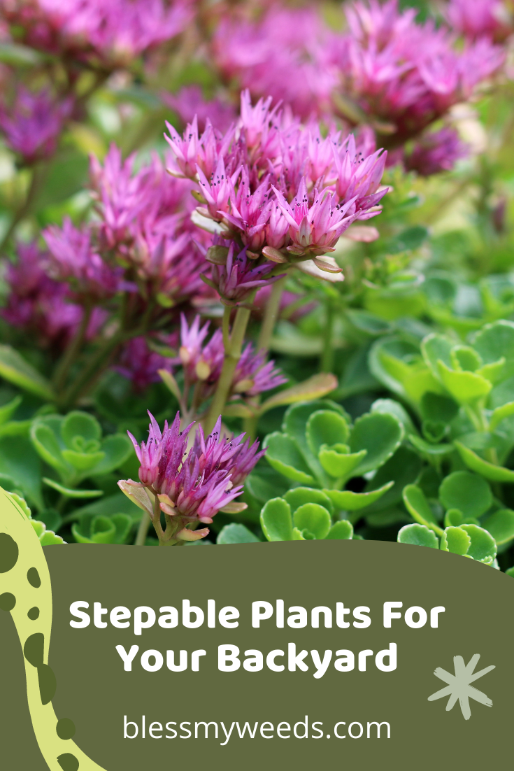 Blessmyweeds.com will turn any thumb green. Don't worry about your gardening abilities with tips that will elevate your skills! These stepable plants will be turn your garden into a whimsical space.