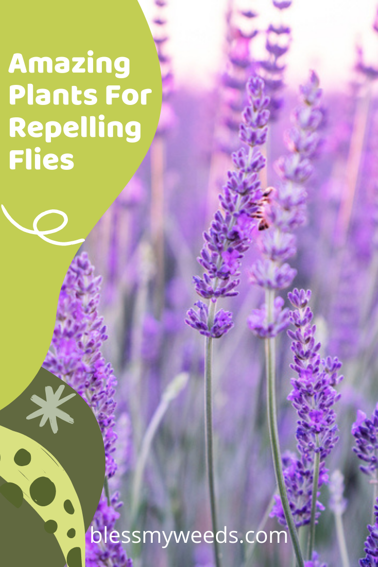 Blessmyweeds.com knows all about plants and gardening. Not only are they decorative, but plants can be highly functional! Check out these incredible plants that will keep flies away from places they're not wanted!
