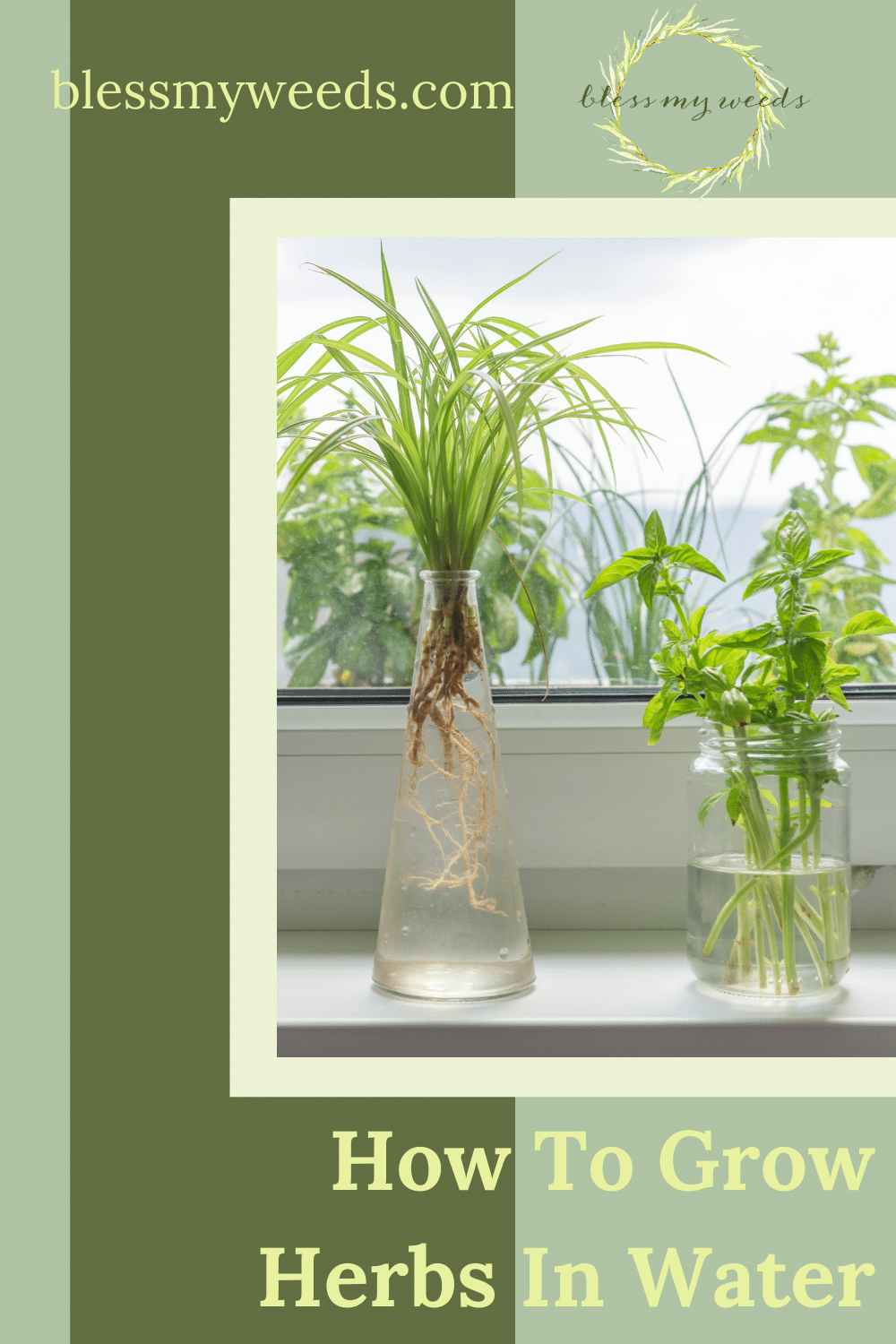 Blessmyweeds.com makes growing plants easy for people of all abilities! If you're just getting into growing your own herbs, find out how you can do it in water (without any soil at all)!