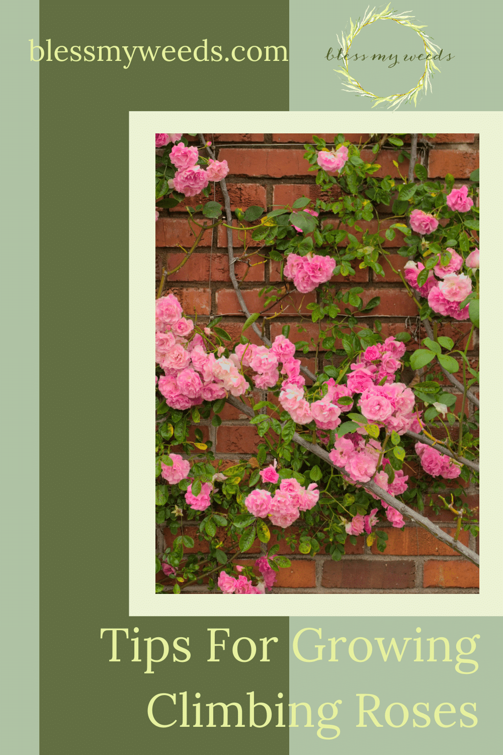 Blessmyweeds.com has all the best ideas and inspo for a perfect yard and garden. If you're looking for an elegant addition to your home landscaping, consider climbing roses. Find out simple ways you can grow perfect climbing roses at your home!
