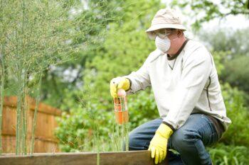 Fertilizer for painted leaf begonia