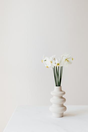 Star-Shaped Flowers Bellflower