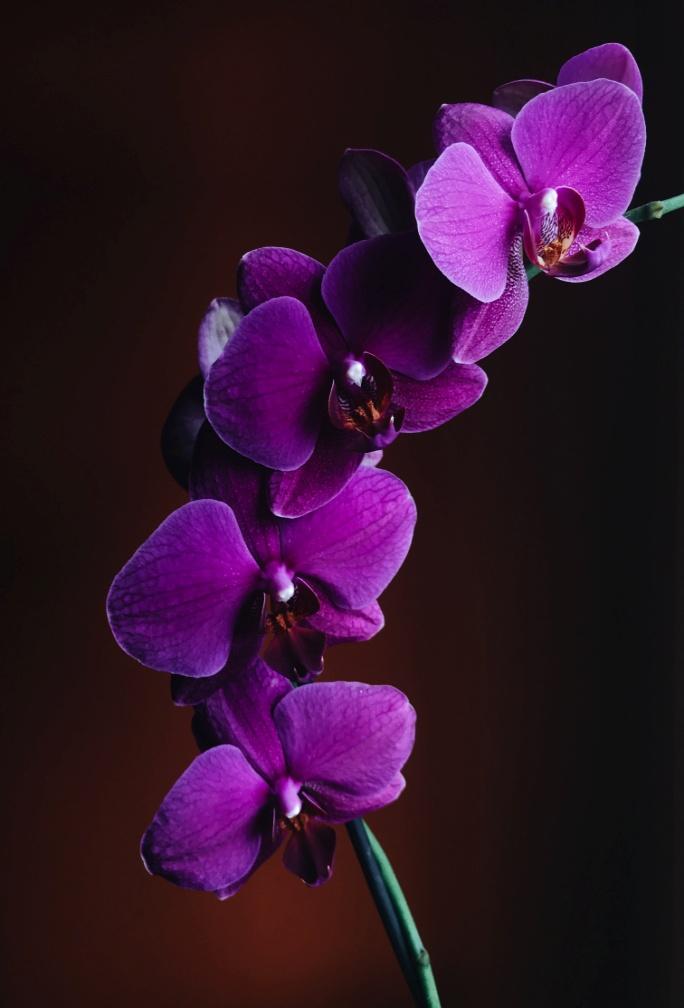 Beautiful Purple-colored bush