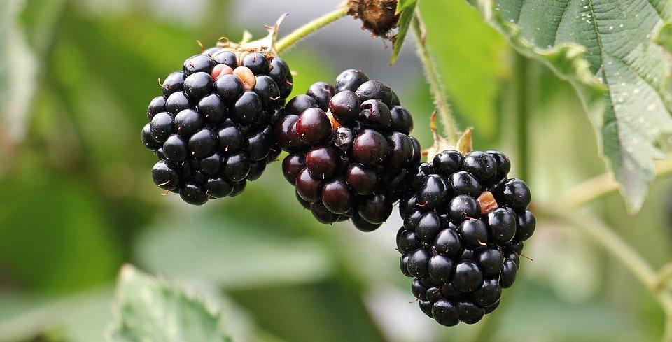 Vine fruit