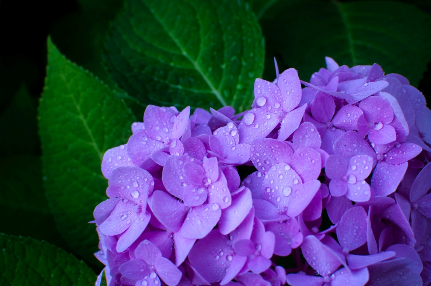 Planting purple flowers