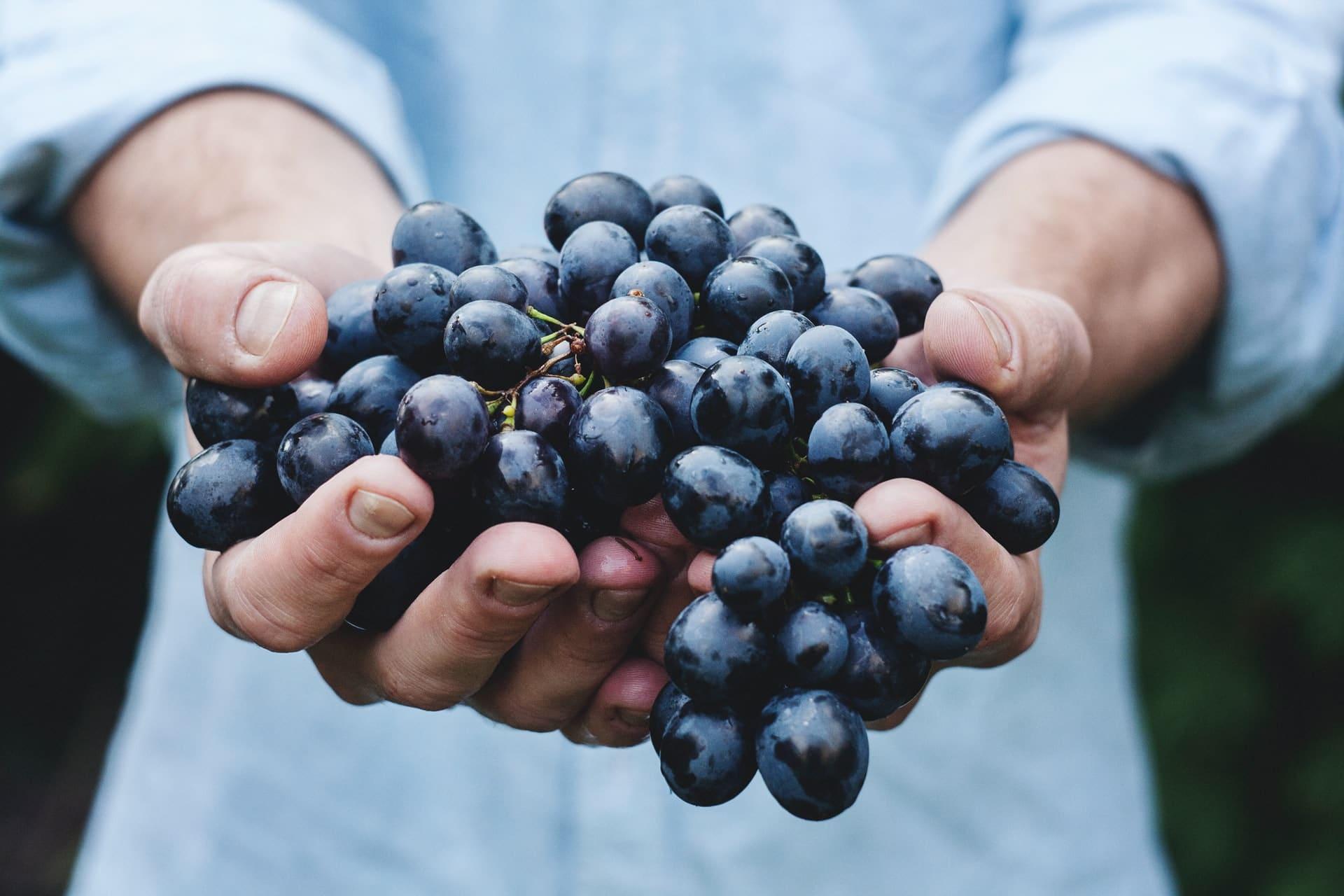 Grapes as a vine fruit