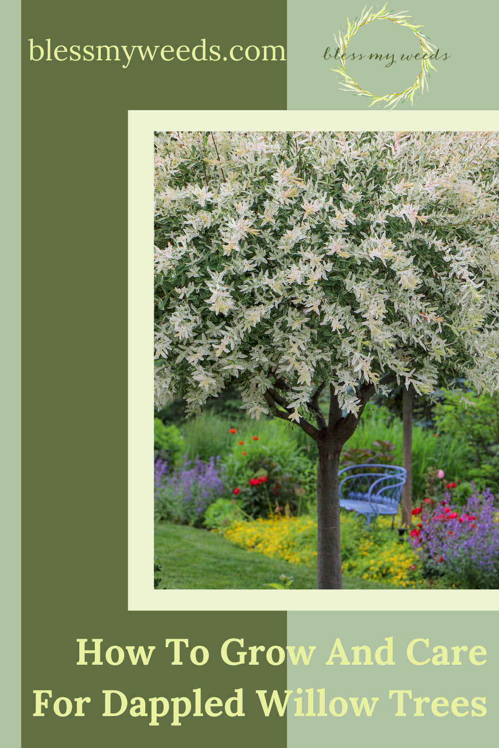 Blessmyweeds.com makes gardening easier than ever with helpful hacks and perfect plant recommendations! Let your hard work fully bloom and master your technique. Find out how you can better care for your dappled willow trees!