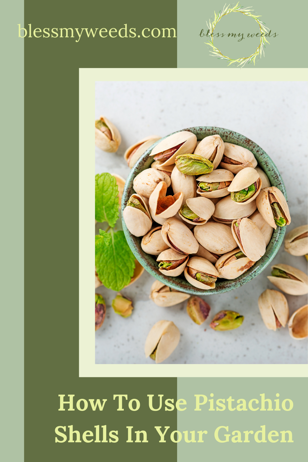 Blessmyweeds.com makes keeping healthy plants easy for anyone! Learn what to grow and how to care for it. Find out all you need to know to use pistachio shells in your garden!
