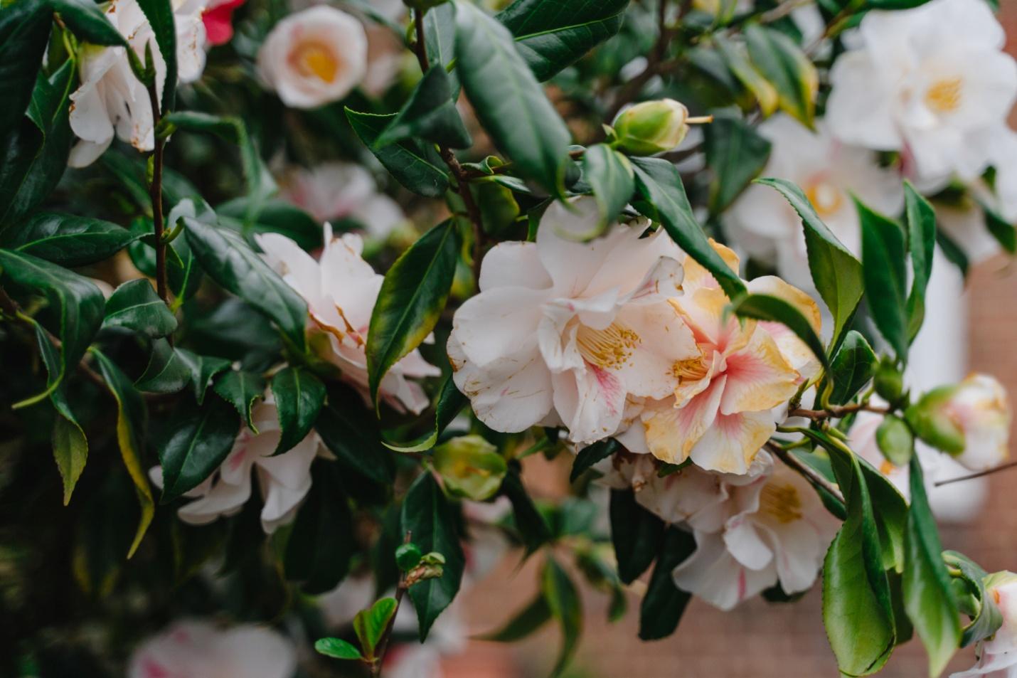 Choosing trailing flowers